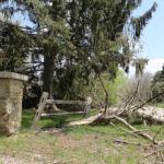 Broken tree near the road / driveway entrance at 2430 W. Predmore, Oakland Township.