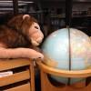 Lion_Globe