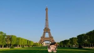 Lion_Paris