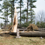 Multiple snapped and fallen trees in Evergreen Cemetery, Lake Orion.