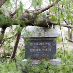 Fallen tree resting on the headstone of John P. Kelly and Jane A. [name obscured] / Evergreen Cemetery, Lake Orion.