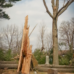 Snapped and fallen trees in Evergreen Cemetery