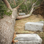 Downed tree laying on / near several headstones in Evergreen Cemetery