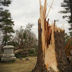 "Snapped tree near ""Casamer"" headstone in Evergreen Cemetery"