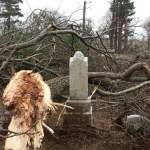 "Fallen tree near ""Rogers"" headstone in Evergreen Cemetery"