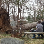A man and boy on a bench near an uprooted tree in Evergreen Cemetery
