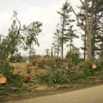 Tree damage along Evergreen Cemetery fence line