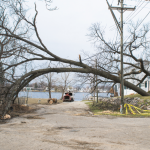 Partially fallen tree arching over Lake Street, Lake Orion.