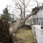 Downed tree resting on damaged room of a house on Lake Street, Lake Orion.