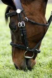 Horsegrazing