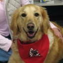 Maggie: Certified Reading Education Assistance Dog