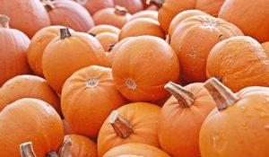 pile of mini pumpkins