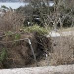 A tree buries a pontoon boat on Shore Drive near Lake Street, Lake Orion.